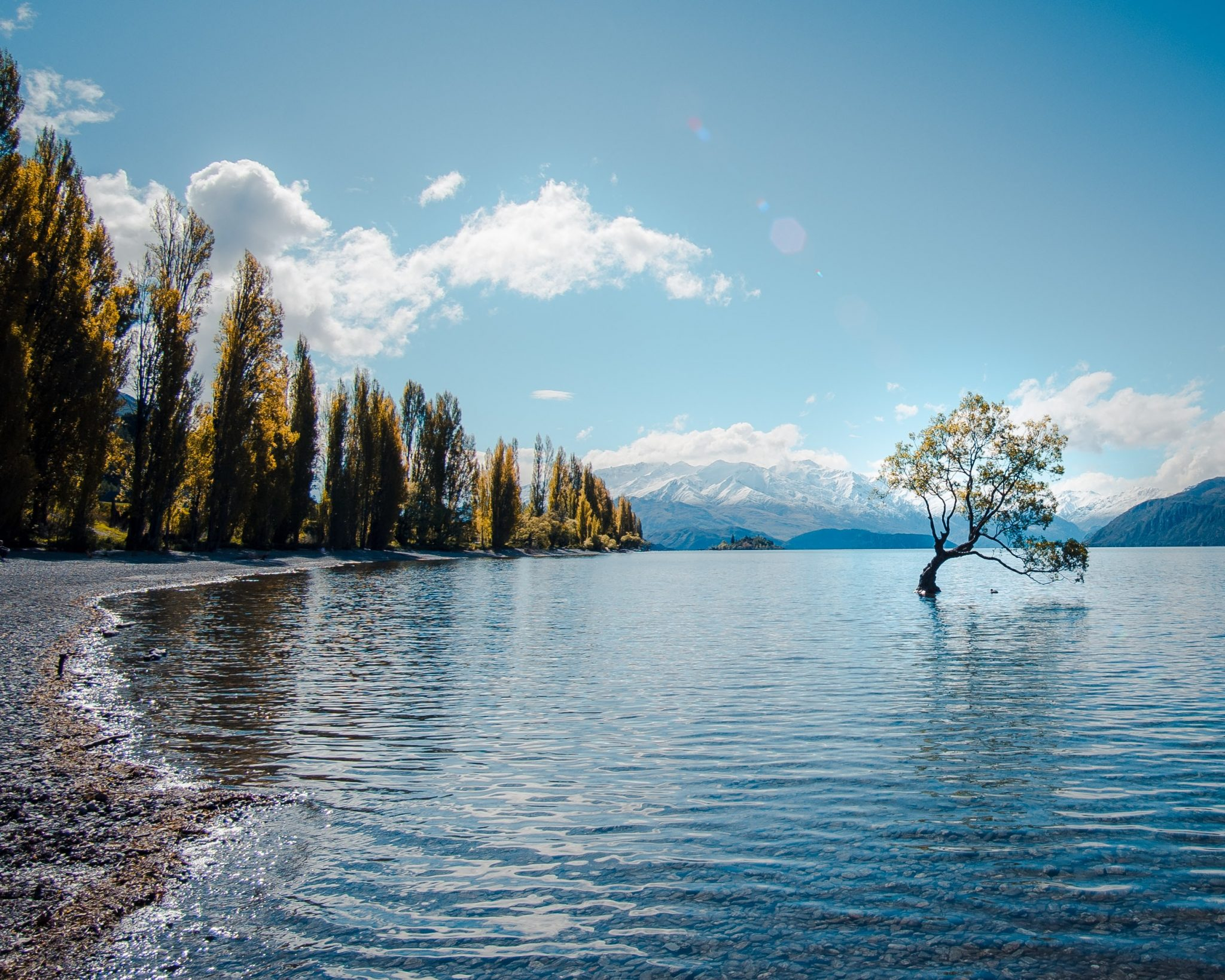That Wanaka tree, Wanaka, New Zealand-unsplash