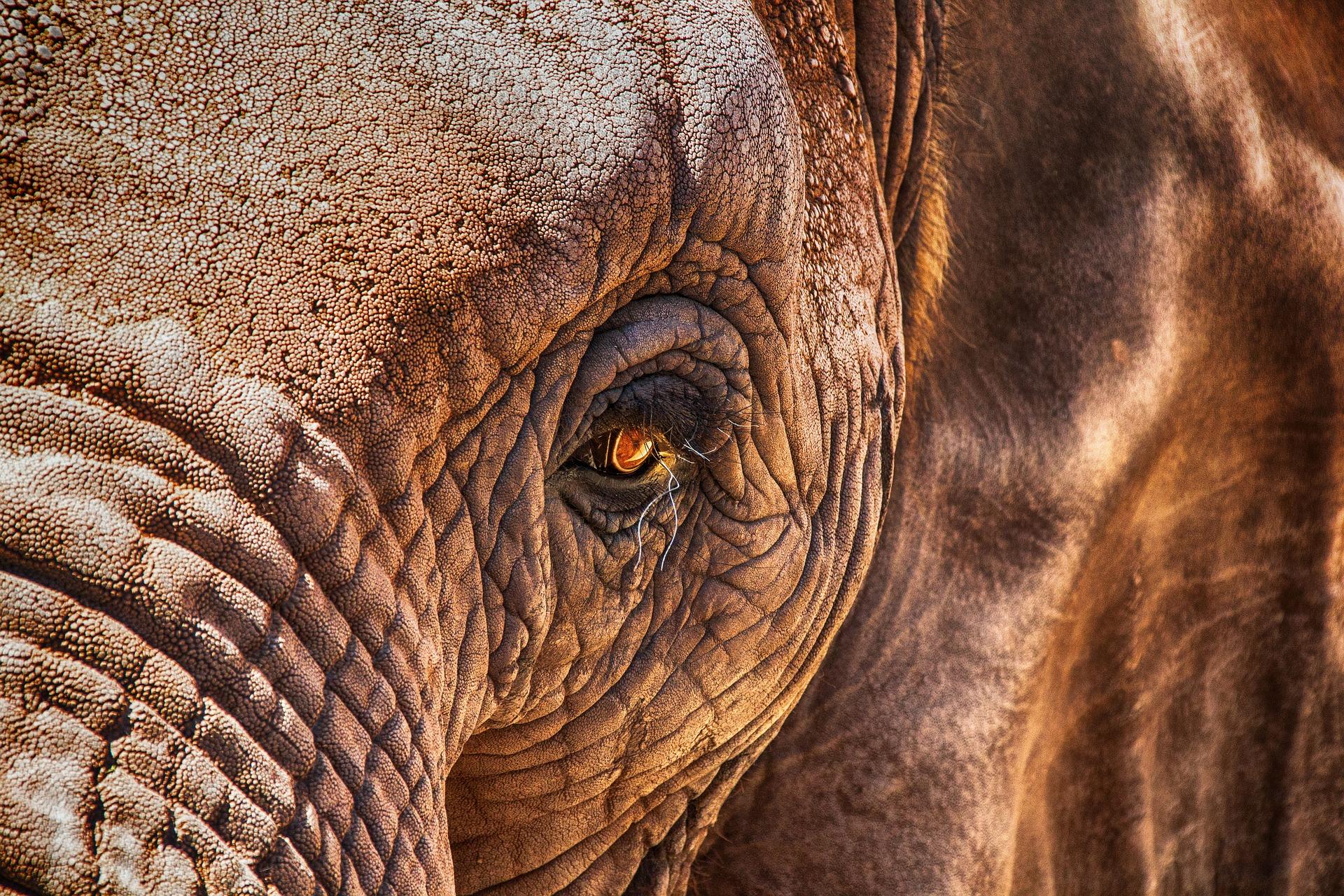 Zvířata Afrika (2)