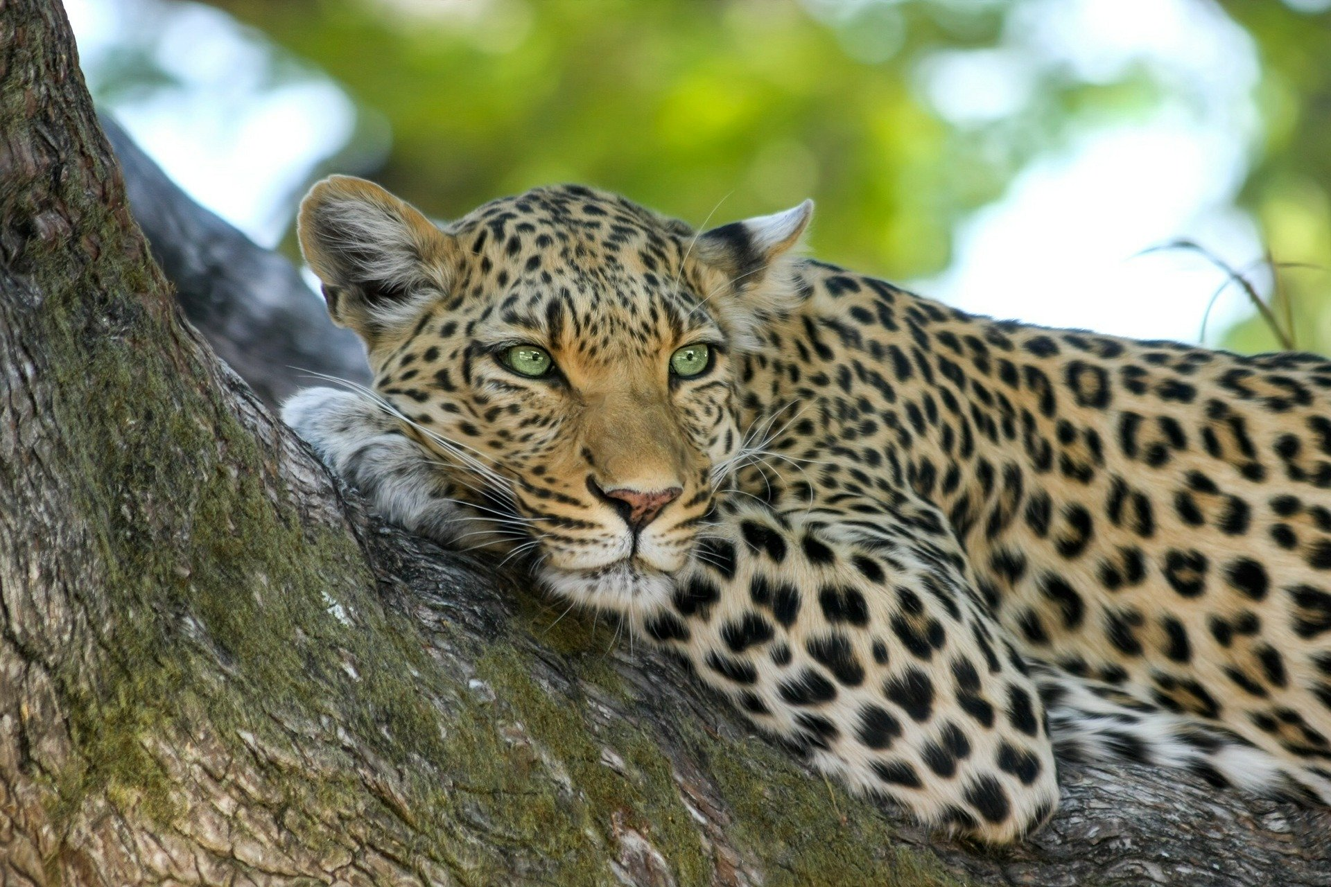 Zvířata Afrika (4)