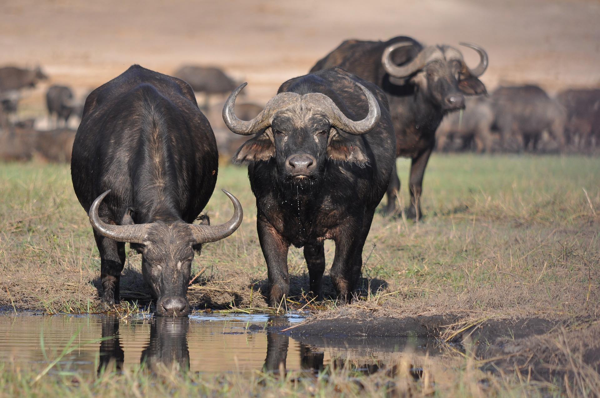 NP Masai Mara