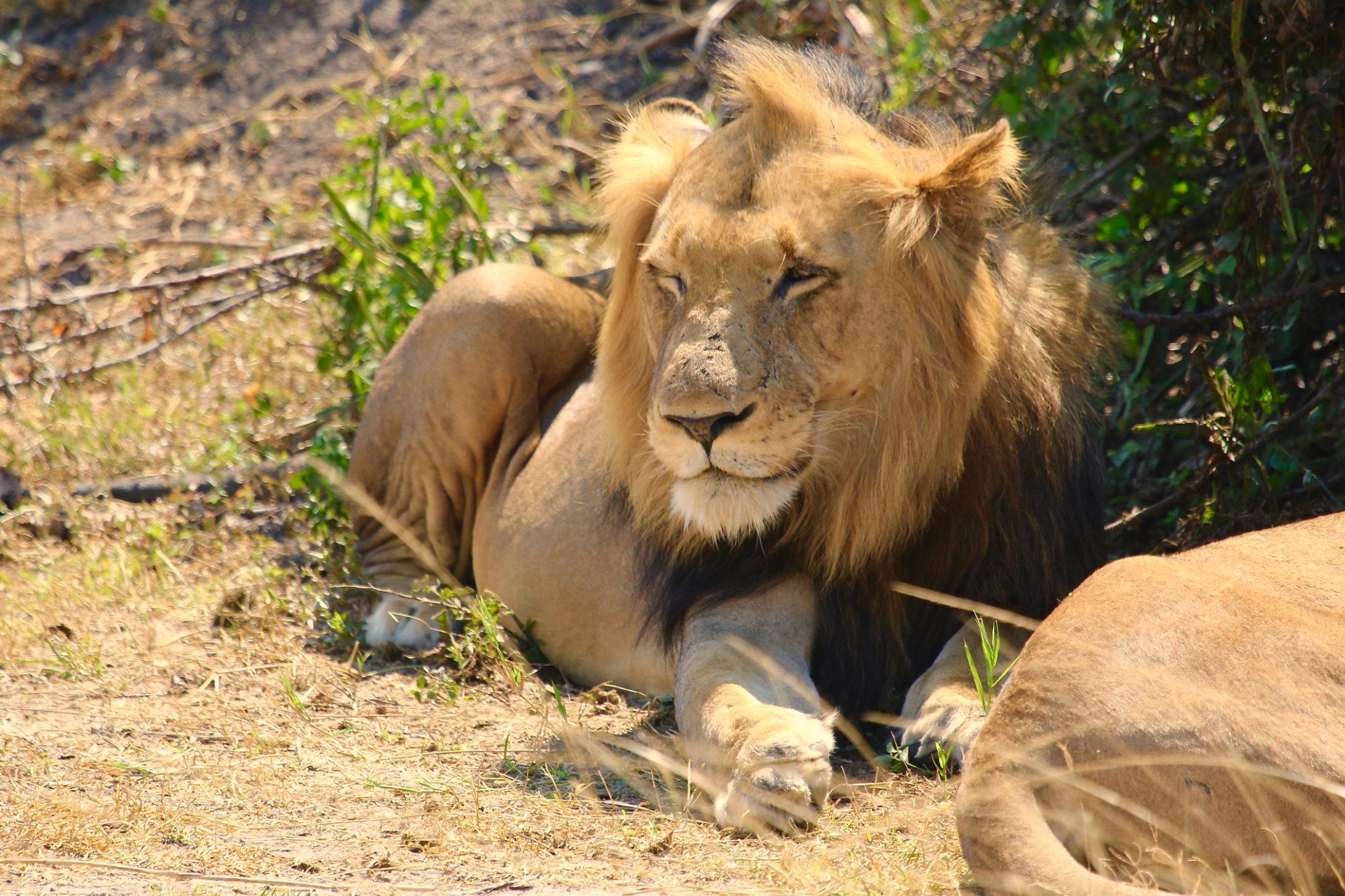 NP Kruger