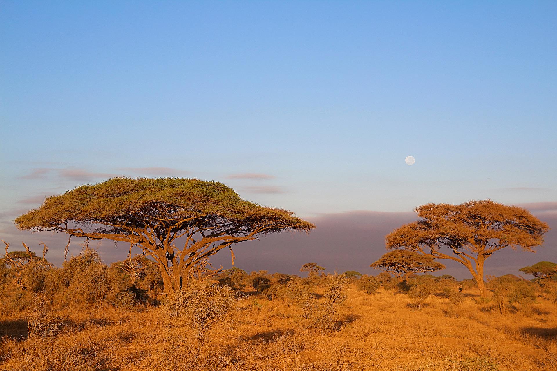 Tanzania (11)
