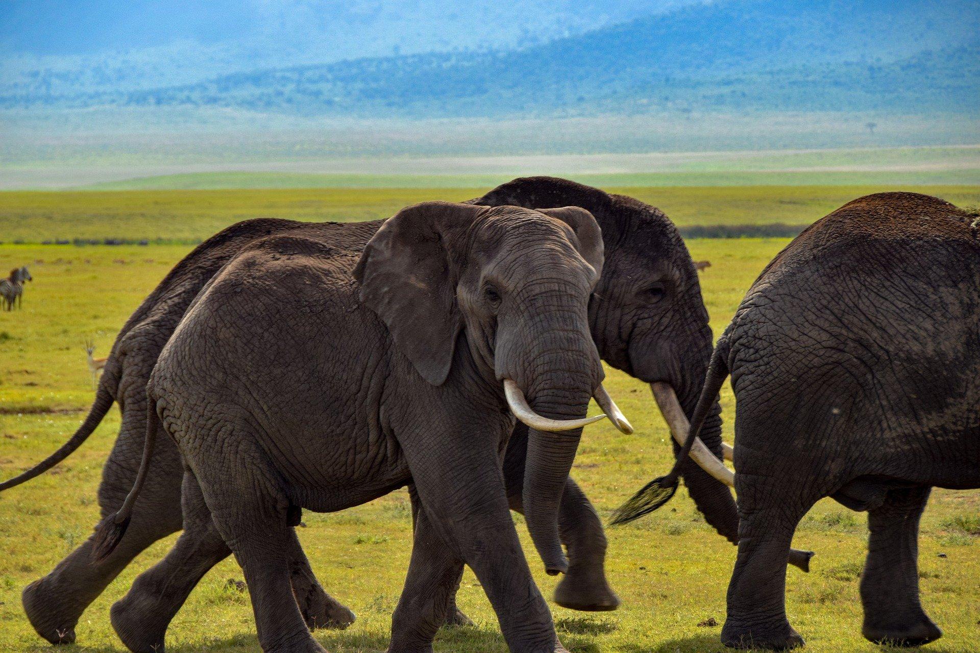 NP Ngorongoro