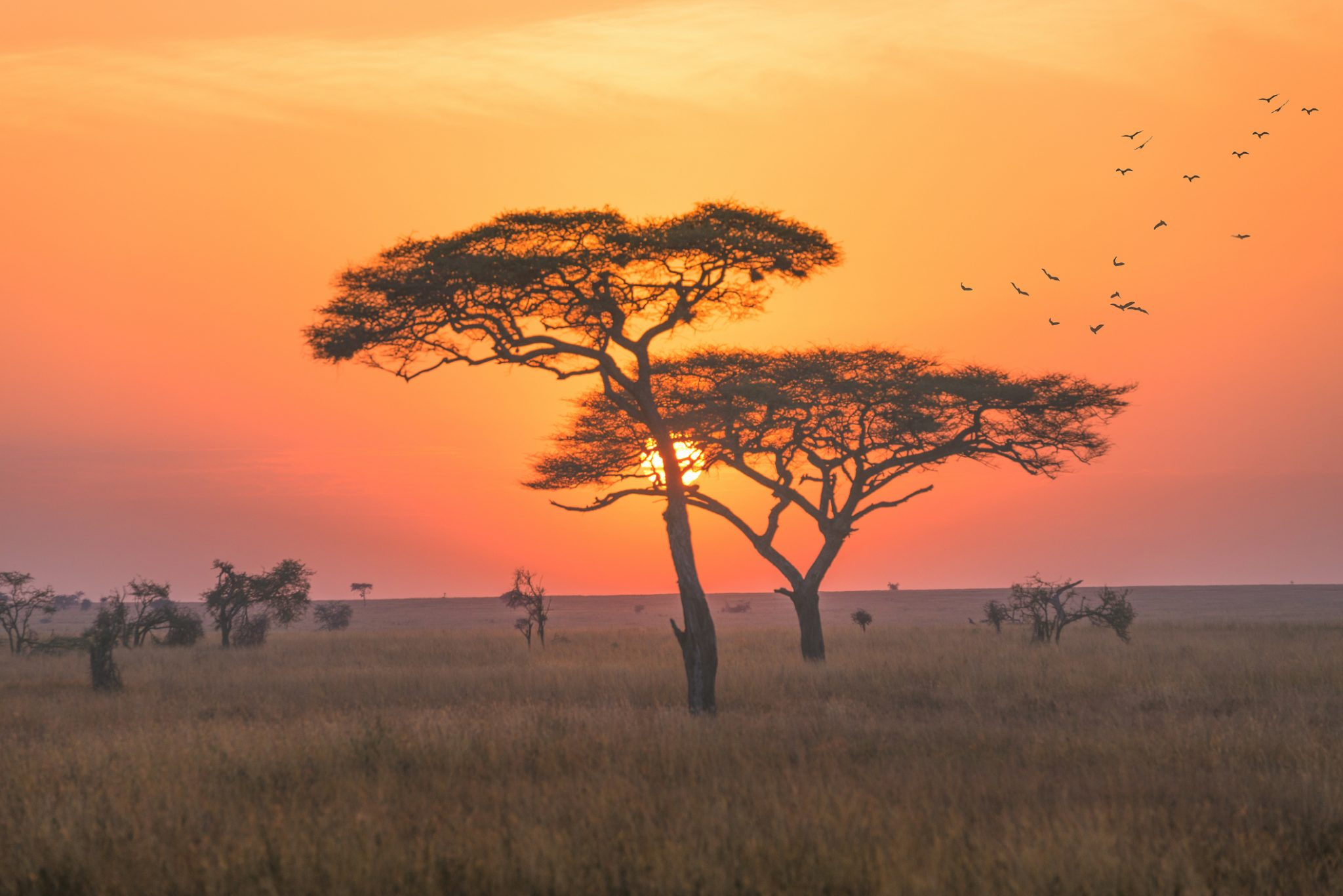 A landscape in the Serengeti national park, early morning with sunrise scence.