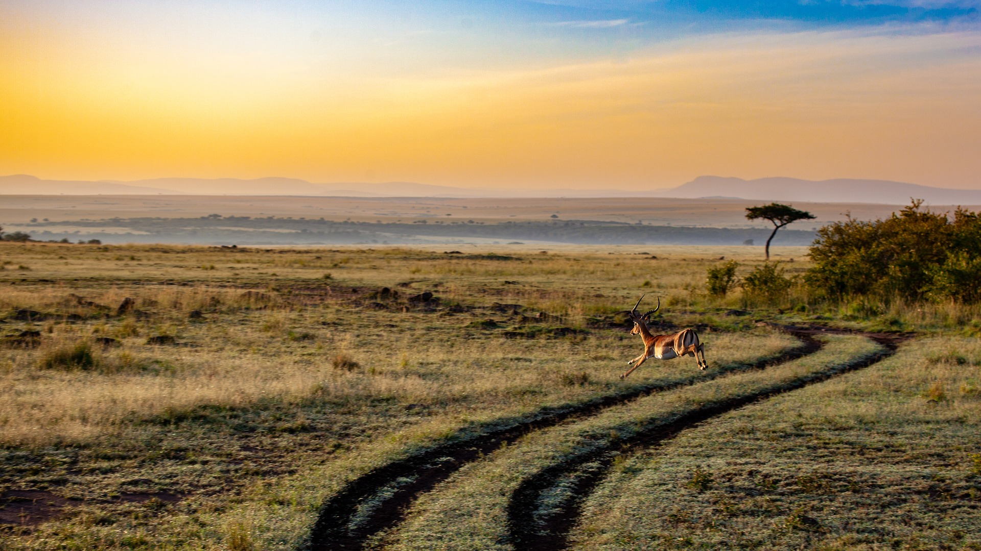 NP Amboseli