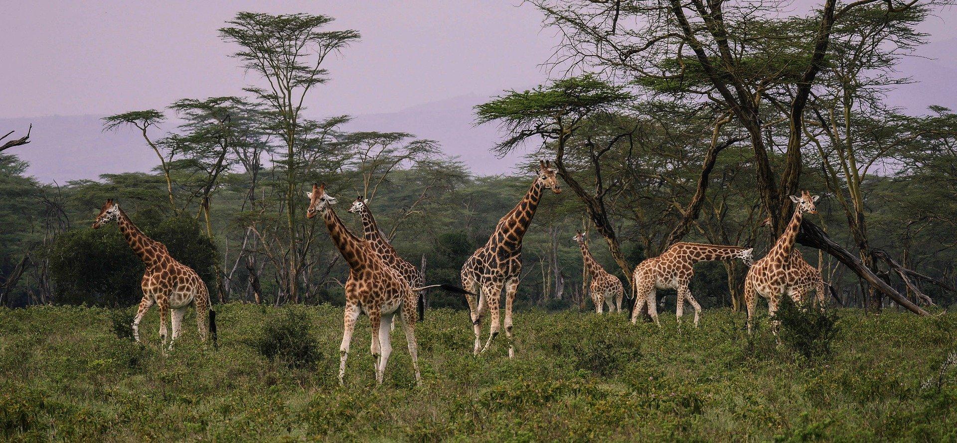 Krásy černého kontinentu – východní Afrika