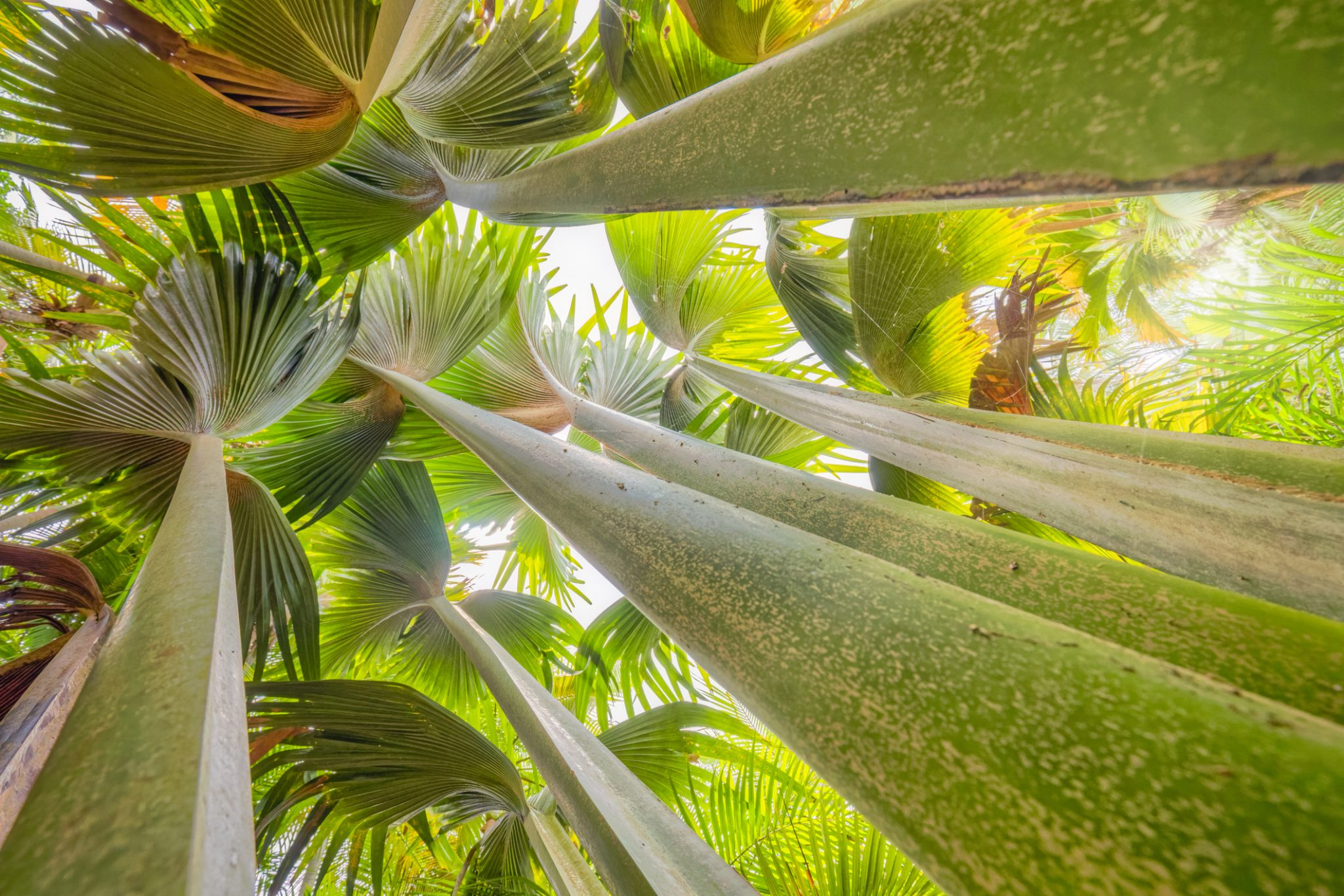 Abstract tropical fauna with palm tree