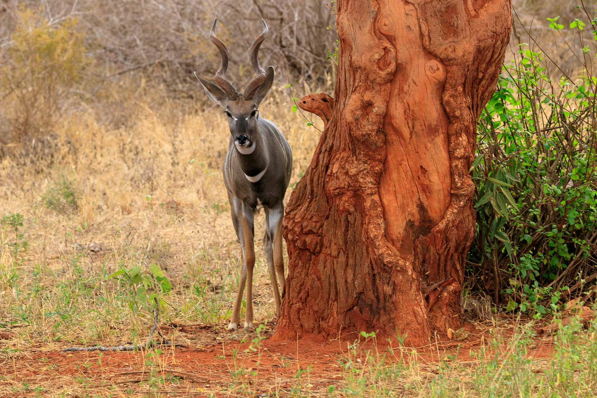 NP Samburu